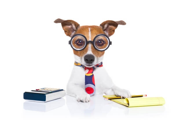 Dog With Calculator And Note Pad