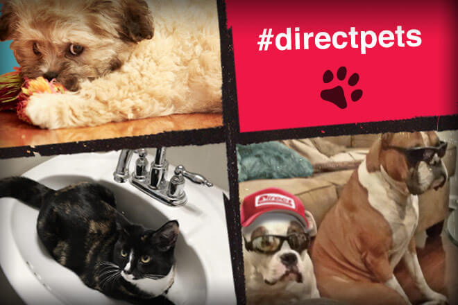 #directpets 2016