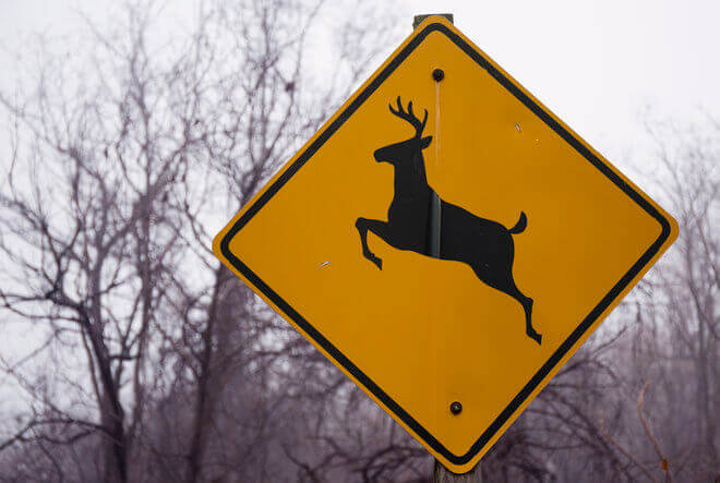 Yellow deer crossing sign alerting drivers to potential deer in the area