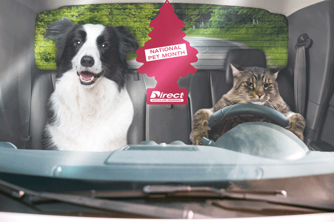 National Pet Month Sweepstakes
