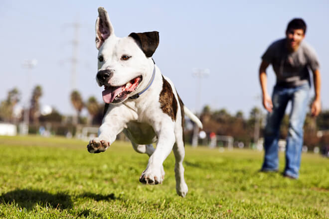 dog-having-fun-in-dog-park-with-owner