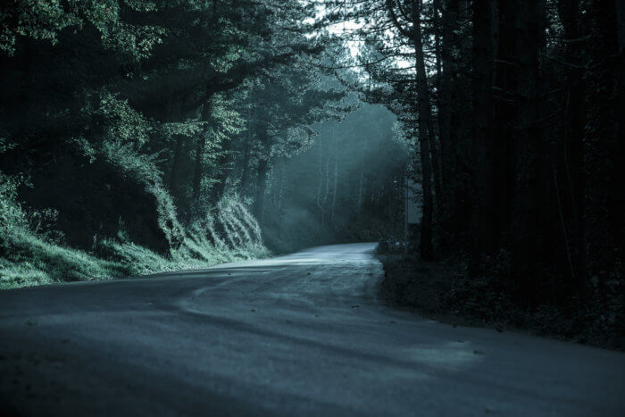 Dark forest road with light seeping in through the trees.