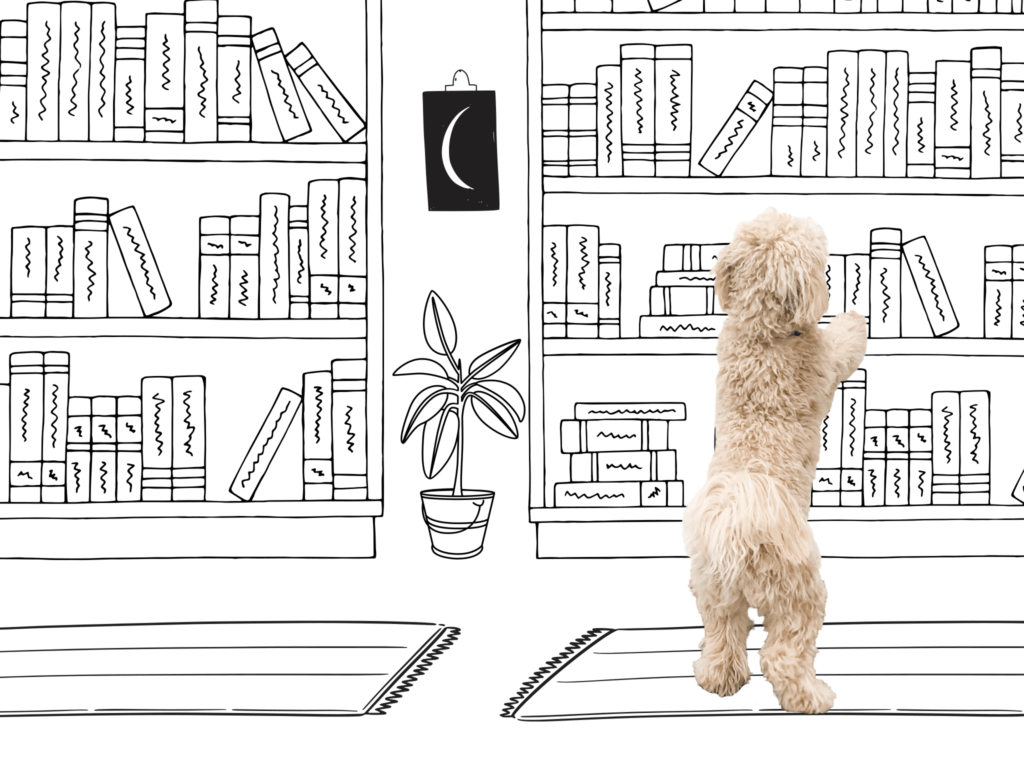 Dog at the book store
