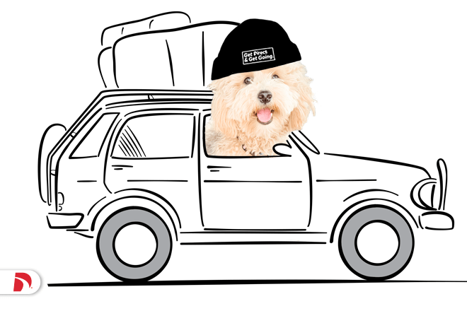Dog driving car wearing a hat