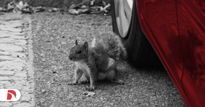 a squirrel sits next to a car tire